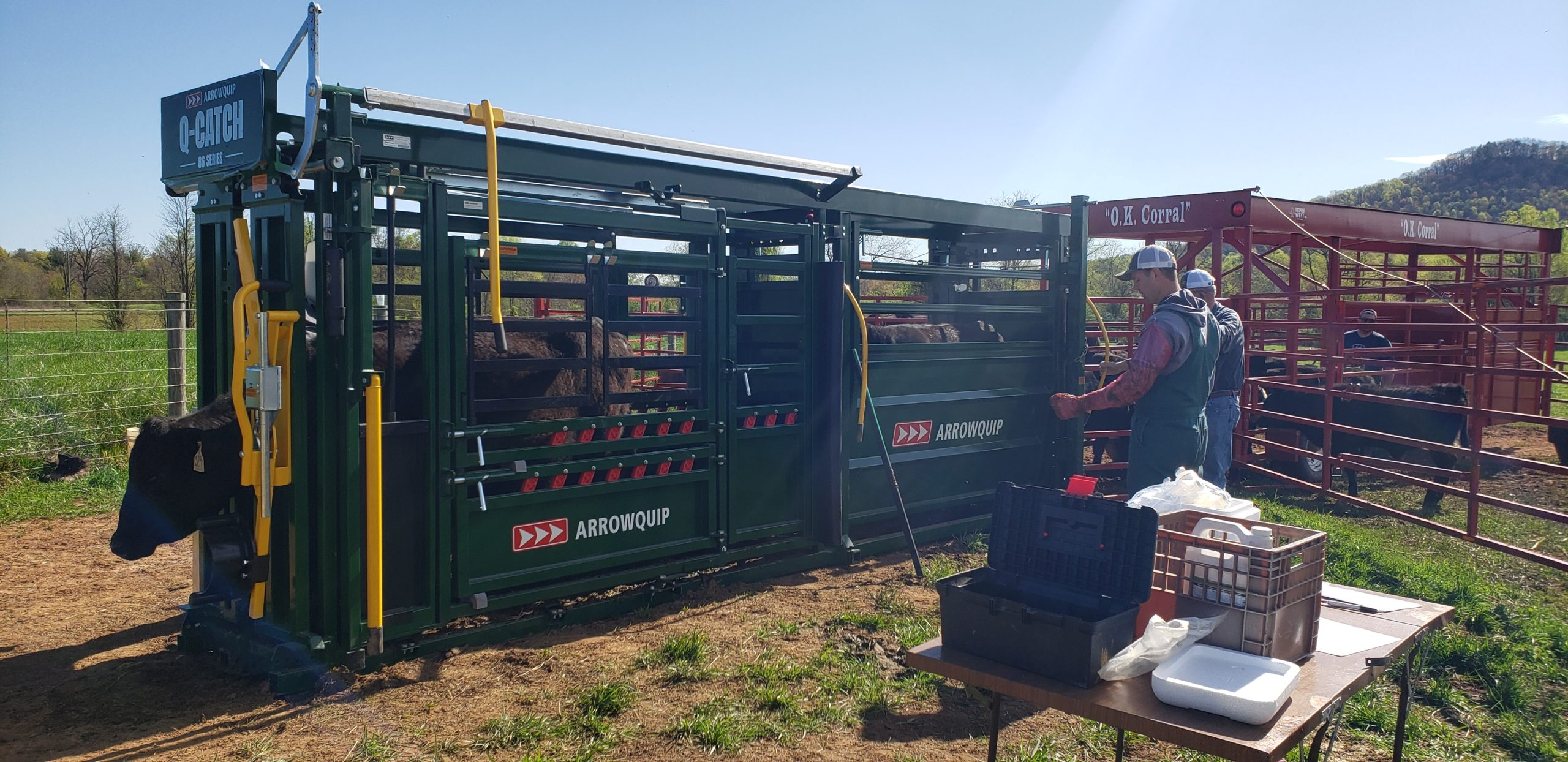 Wilkes County farmers increase profits thanks to innovative programs